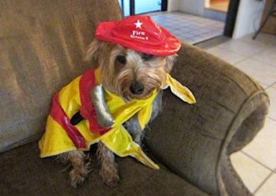 Firedog Max