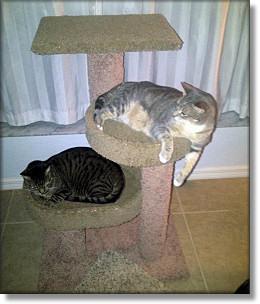 Max & Merlin