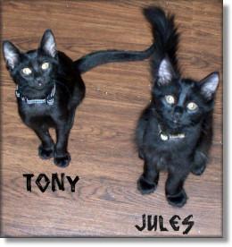 Tony & Jules