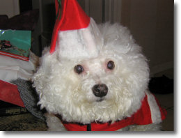 FREE Pictures with SANTA @ Cats n Dogs   Port Charlotte   Florida   United States