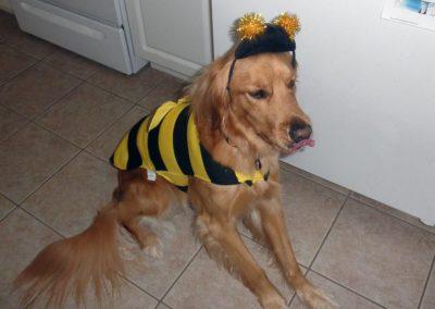 Montana, a busy bee