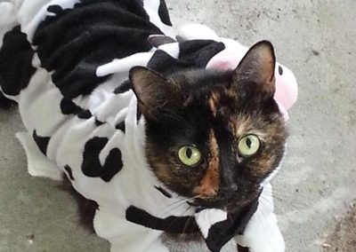 Darcy's Kitty Cow