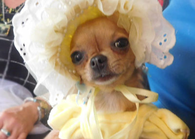 Tia Chihuahua