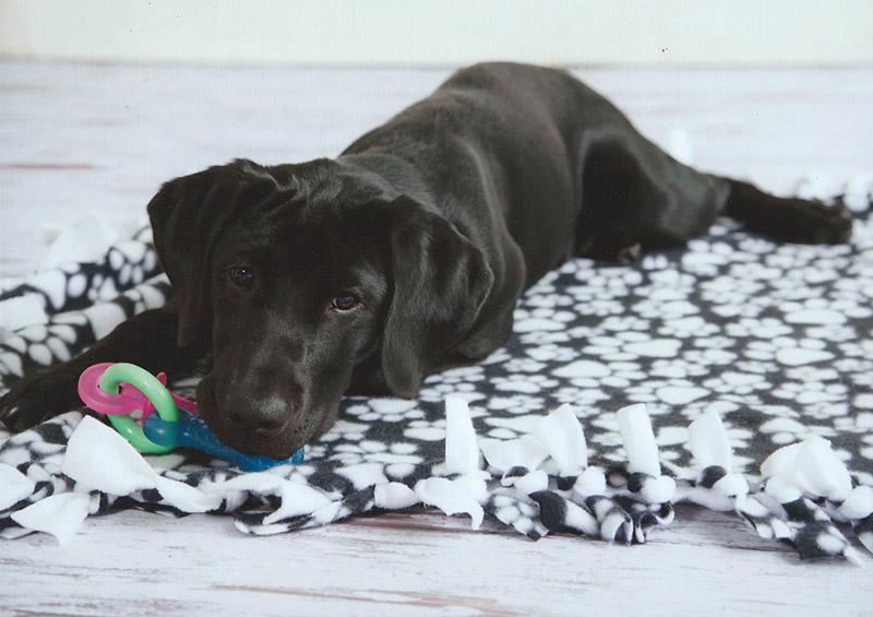Pilot, Southeastern Guide Dog