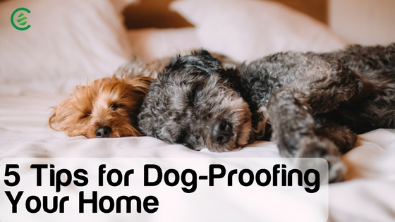 5 tips for dog-proofing your home
