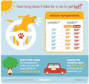 Florida has a Hot Car Law protecting pets!