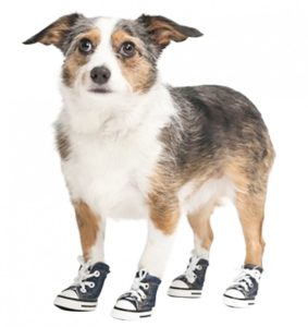 Booties or shoes can protect your dog's feet on the hot summer pavement.