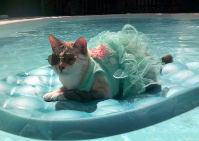 Broshi the cat is wearing a blue dress and sunglasses. She is on a blue raft floating in a pool.