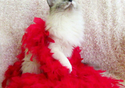 WINNER! Best Cat in Feathers: Cora