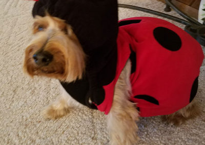 Max the dog is dressed as a lady bug