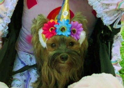 Sophia, a Yorkie, is in her stroller wearing a hat with three flowers and a Unicorn horn.