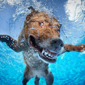 marine-dog