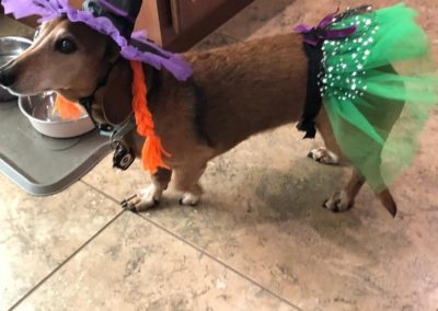 WINNER! Best Witch Doxie