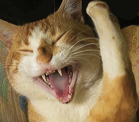Mango having a good Cat n Dog Store laugh