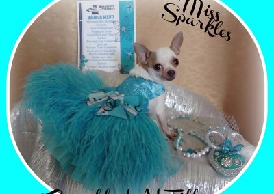Cats N Dogs - Miss Sparkles in a Blue Dress