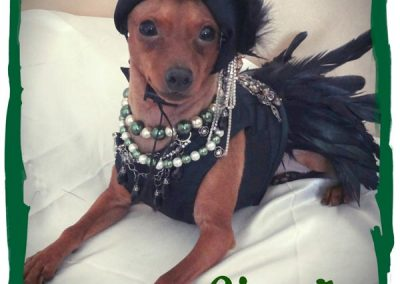 Cats N Dogs - Sizzle in a Flapper Girl Dress