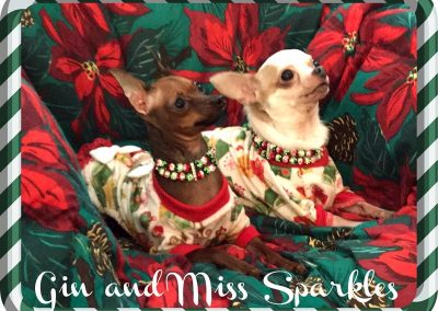 Cats N Dogs - Gn & Miss Sparkles in Christmas Pajamas