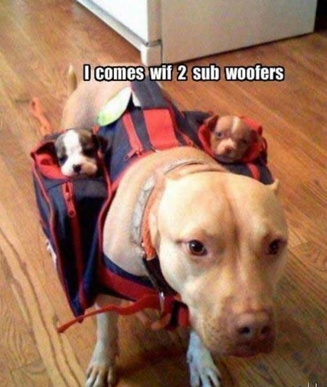 A dog with a backpack with two puppies-one on each side and the words. I comes with 2 sub woofers