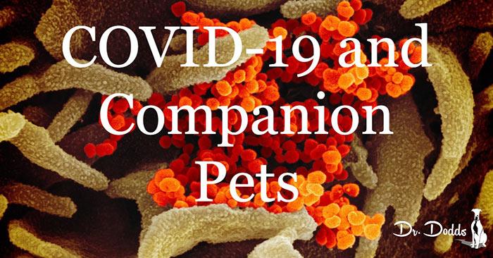 COVID-19-and-Companion-Pets