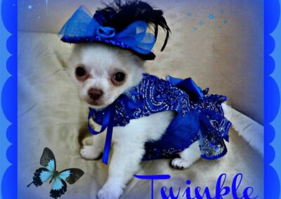 White dog in a blue sparkly dress with a hat