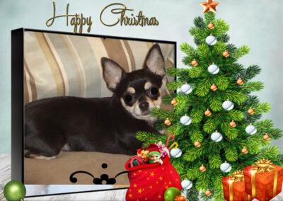 A photo of a black Chihuahua superimposed behind a Christmas tree with gifts