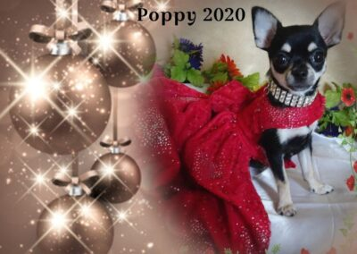 "Small black dog in a red evening gown like outfit ""Poppy 2020"""
