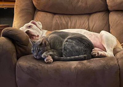 White dog and gray cat lay on the couch together.