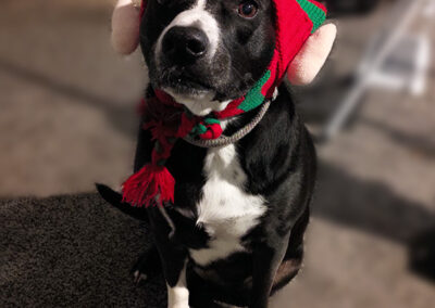 Black dog with an elf hat that has elf ears on it