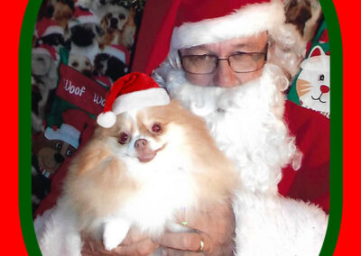 Pomeranian Lola is held by Santa