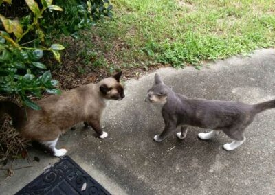 Two cats greet each other outside