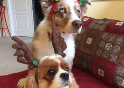 Dogs Sydney and Landon wearing reindeer antlers