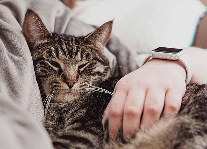 Adopt a cat or dog, cat snuggling with Human