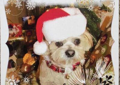 Picture of a White dog with a Christmas hat on a Christmas Card