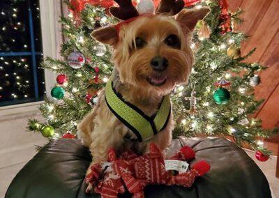 Max's Christmas Photo 2020