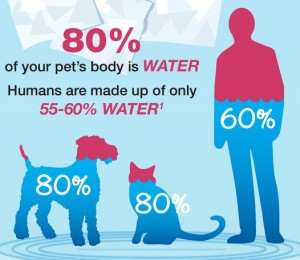 Infographic about Dog & Cat Hydration- click here