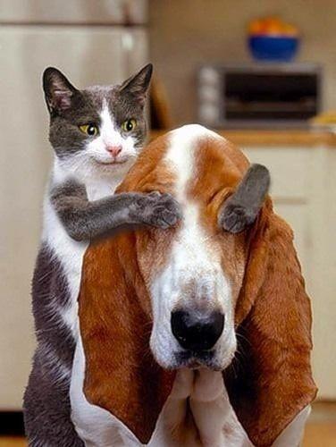 Cat Telling a Bloodhound a joke
