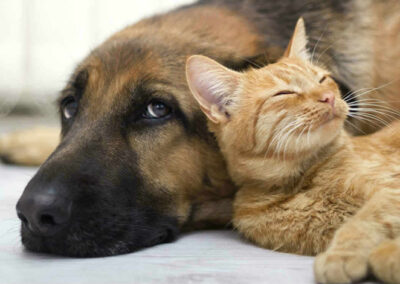 Adult dog and cat napping together