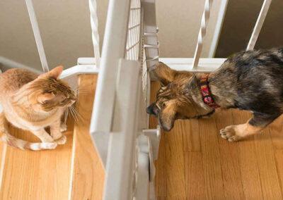 Cat n Dog scent desensitizing