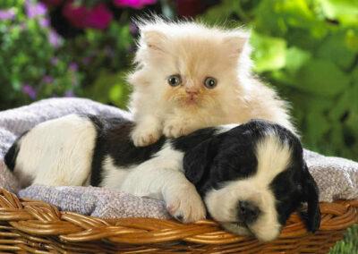 Kitten & puppy friends